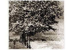 Photo de l'Almanach d'événement météo du 1/11/1919