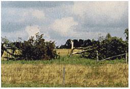Photo de l'Almanach d'événement météo du 11/7/1984