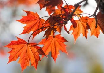 Pourquoi les feuilles changent-elles de couleur à l'automne ?