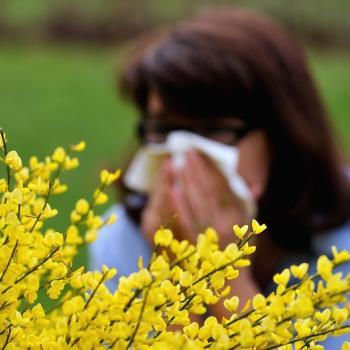 Pollens - suivi et prévision